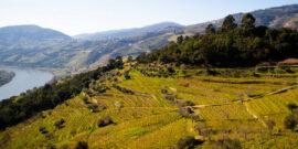 Die besten Weingüter und Weinkellereien in Portugal
